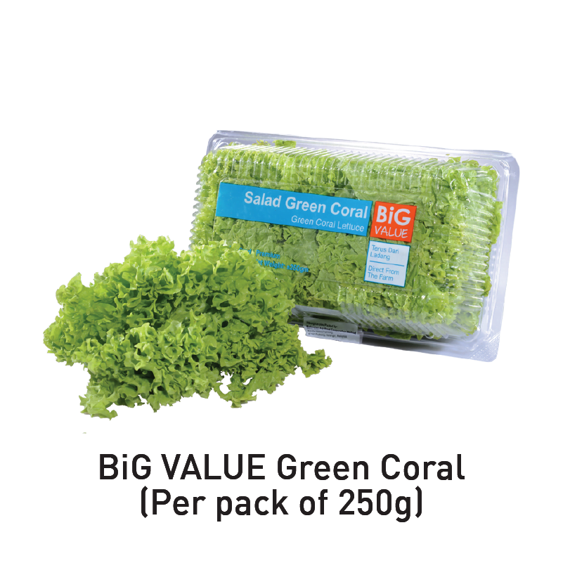 big value green coral aeon big